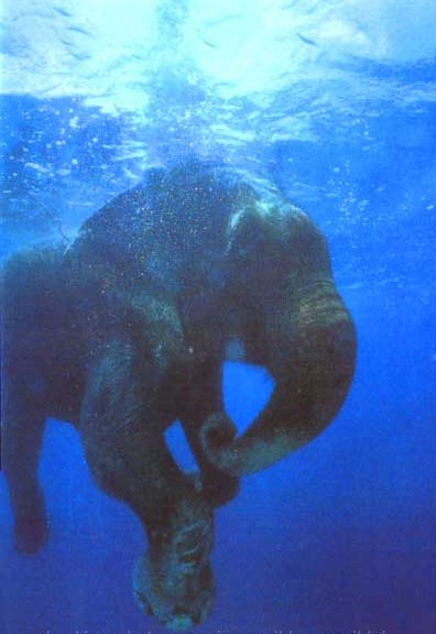 files/images/elephant.jpg
